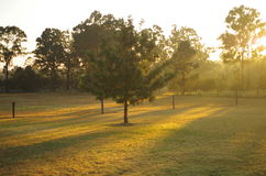 Sunrise in Hunter valley. Hunter valley gardens has a beautiful light early in the morning Stock Images