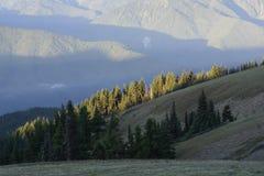 Sunrise on Hurricane Ridge, Olympic National Park, Washington royalty free stock image