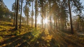 Forest sunrise time lapse 4K