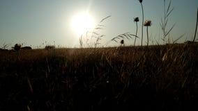 Sunrise image Stock Image