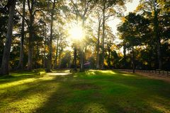 Free Sunrise In Spring  Forest Trees. Nature Woods. Beautiful Morning Scene Stock Images - 100164794