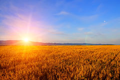 Sunrise In The Field Royalty Free Stock Photos