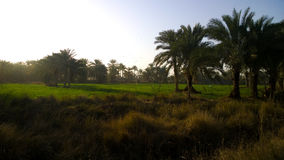 Sunrise in the Iraqi countryside Royalty Free Stock Photos