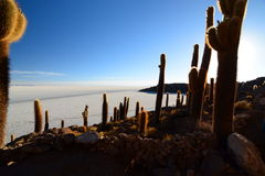 Sunrise at Isla Incahuasi. Salar de Uyuni. Potosí Department. Bolivia. Isla Incahuasi is a hilly and rocky outcrop of land and former island in Bolivia situated Royalty Free Stock Photo
