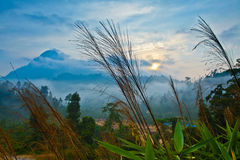 Sunrise In The Jungle Royalty Free Stock Photography