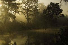 Sunrise on the jungle, Bardia national park, Nepal Stock Photography
