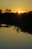 Sunrise in the jungle, Bolivia Stock Image