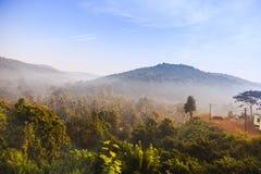 Sunrise in jungle Stock Photos