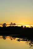 Sunrise in the jungle. Royalty Free Stock Photography