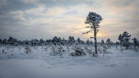 Sunrise at Kõnnu Suursoo bog. Cold morning at Kõnnu Suursoo bog, Estonia Royalty Free Stock Photo