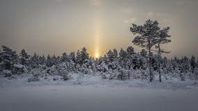 Sunrise at Kõnnu Suursoo bog. Cold morning at Kõnnu Suursoo bog, Estonia Royalty Free Stock Images