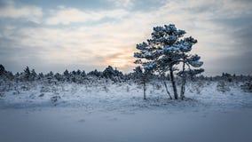 Sunrise at Kõnnu Suursoo bog. Cold morning at Kõnnu Suursoo bog, Estonia Stock Photos