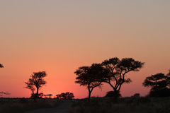 Sunrise in Kgalagadi. With Acacia tree silhouette Stock Photo