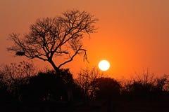 Sunrise - Kruger National Park Royalty Free Stock Image