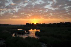 Sunrise at Kruger Park Stock Photography