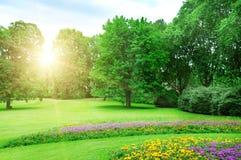 Sunrise in l summer park Stock Photo