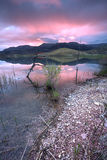 Sunrise by the lake. Royalty Free Stock Image