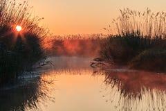 Sunrise lake. Sunrise on the lake among the reeds. Comana Natural Park, Romania Royalty Free Stock Images