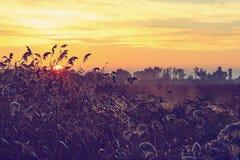 Sunrise on the lake of Almenara. Stock Images