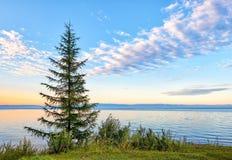 Sunrise on Lake Baikal. Young larch grows alone on edge of shore. National Park. Irkutsk region. Russia Stock Image