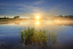 Sunrise. On a lake with reeds in the foreground Stock Image