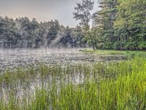 Forest and lake in early morning Stock Photo