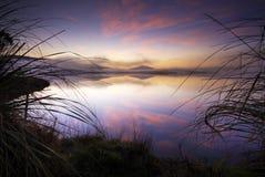 Sunrise, Lake Taupo, New Zealand. Sunrise on lake through grasses. New Zealand Stock Photo