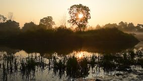 Sunrise at lake with tree silhouette. Panning shot stock video footage