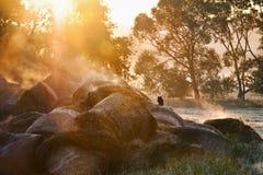 Sunrise landscape and cat Stock Images