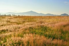 Sunrise in landscape with dry grass Stock Image