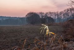 Sunrise landscape on meadow by the river Stock Photo