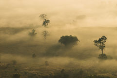 Sunrise landscape and the mist covering field at Phu Lang Ka,Thailand. Stock Images