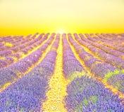 Sunrise in a lavender field Stock Photo