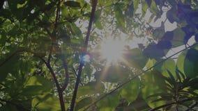 Sunrise and Leaves Slider 1 stock video