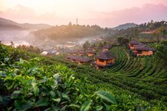 Sunrise at Lee wine Rak Thai, Chinese settlement, Mae Hong Son, Thailand stock photography
