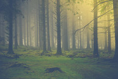 Sunrise light in autumn fog forest Royalty Free Stock Photo