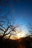 Sunrise light between the branches at spring Royalty Free Stock Photography
