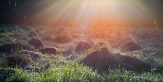 Sunrise light in a field stock photo