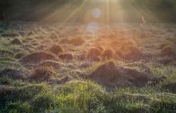 Sunrise light rays. Sunrise light in a field. sun rays in bright Royalty Free Stock Images
