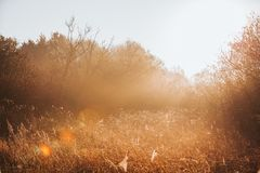 Sunrise light streaming through forest plants. Golden hour royalty free stock photography