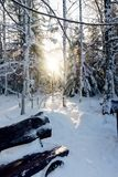 Winter sunlight in the national park in Russia with a wooden bench on the front and a lot of snow in forest Stock Photo
