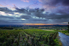 Sunrise lights over vineyards of Beaujolais, France royalty free stock photography