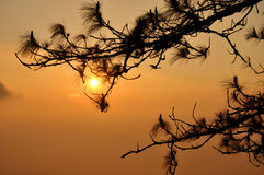Sunrise with lone tree silhouette Royalty Free Stock Image