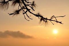 Sunrise with lone tree silhouette Stock Photo