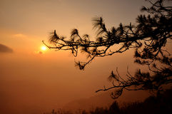 Sunrise with lone tree silhouette Stock Image