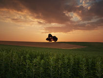 Sunrise with lonely trees Royalty Free Stock Image