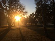 The sunrise in Macquarie University. Campus Stock Photography
