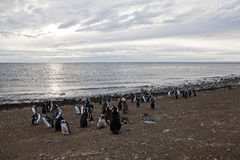 Sunrise at magdalena island. House of the magellanic penguin. Chile Royalty Free Stock Photos
