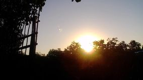 Sunrise in the mangrove forest. stock video footage