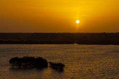 Sunrise and Mangrove Trees Stock Photos